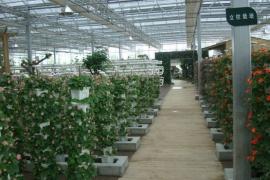 生态观光温室