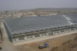 建设中的四川乐山观光、育苗温室