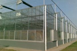 四川北川高科技农业示范园玻璃温室