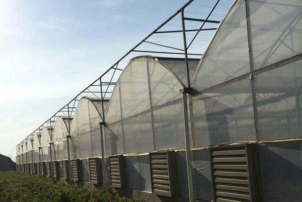 TCWS经济型圆拱顶连栋温室