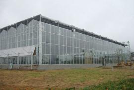 TCWS文洛式连栋温室
