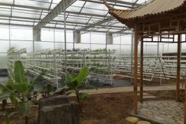 TCST型生态观光温室