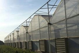 安徽TCWS经济型圆拱顶连栋温室